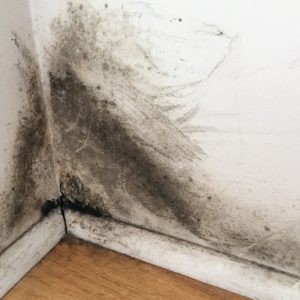 Mold Remediation in IL