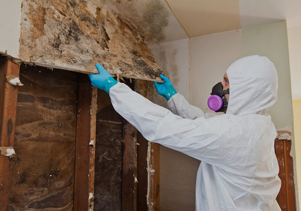mold removal and remediation