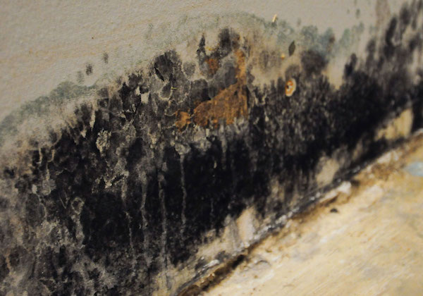 mold removal and remediation service