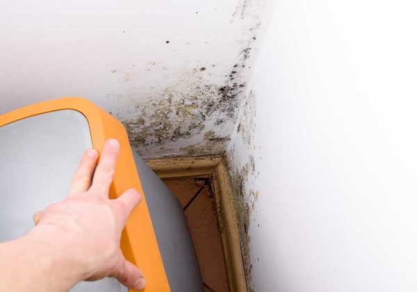 Mold removal and remediation Illinois company local
