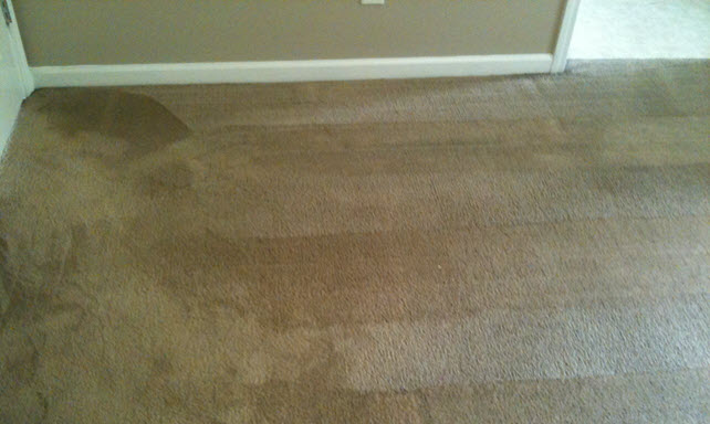 Saving Carpets from Mold
