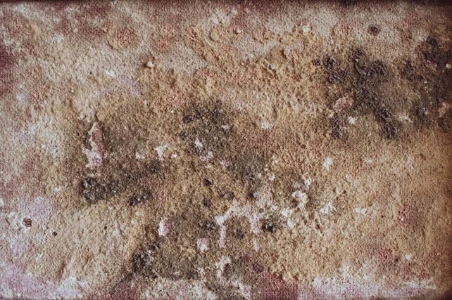 Why Professionals Are More Effective in Mold Remediation