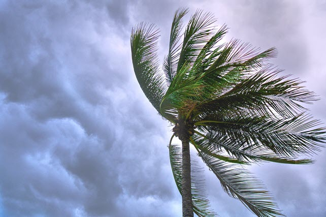 Why Business Cannot Ignore Storm Precautions